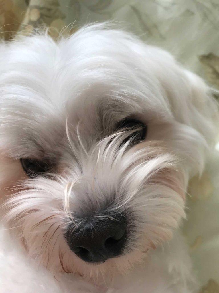 teddy-lesley