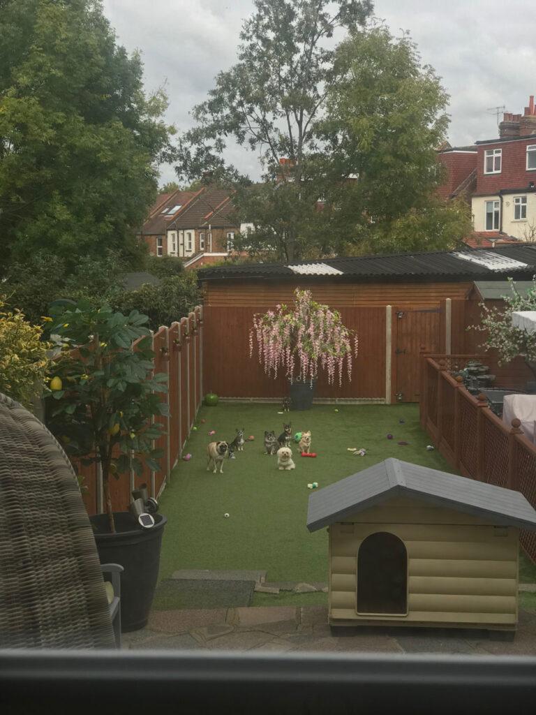 garden-picWEB